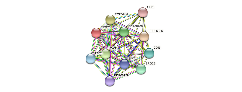ERG25 protein (Chlamydomonas reinhardtii) - STRING interaction network