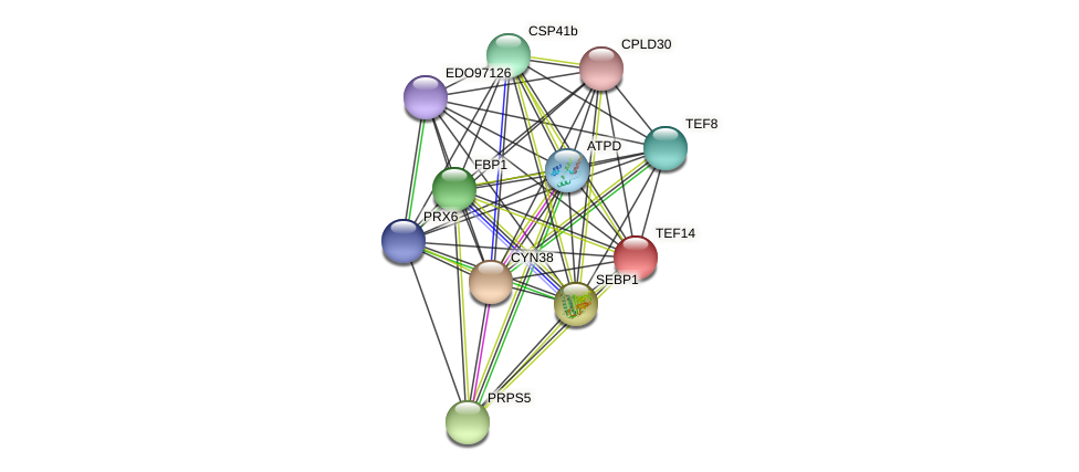 TEF14 protein (Chlamydomonas reinhardtii) - STRING interaction network