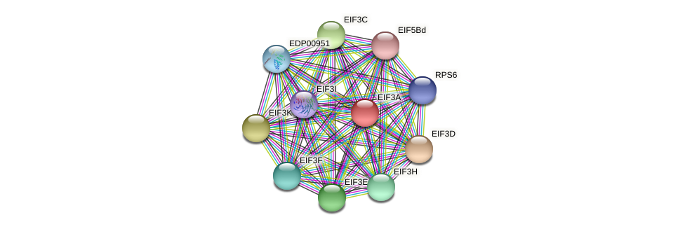 EIF3A protein (Chlamydomonas reinhardtii) - STRING interaction network