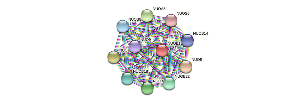 NUOB13 protein (Chlamydomonas reinhardtii) - STRING interaction network