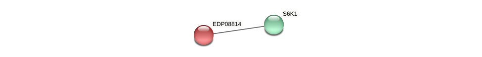 EDP08814 protein (Chlamydomonas reinhardtii) - STRING interaction network