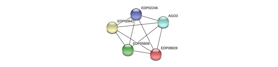 EDP08828 protein (Chlamydomonas reinhardtii) - STRING interaction network