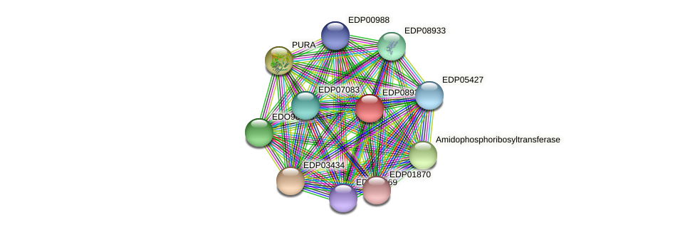 EDP08934 protein (Chlamydomonas reinhardtii) - STRING interaction network
