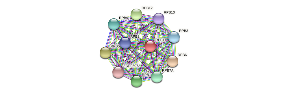 RPB11 protein (Chlamydomonas reinhardtii) - STRING interaction network