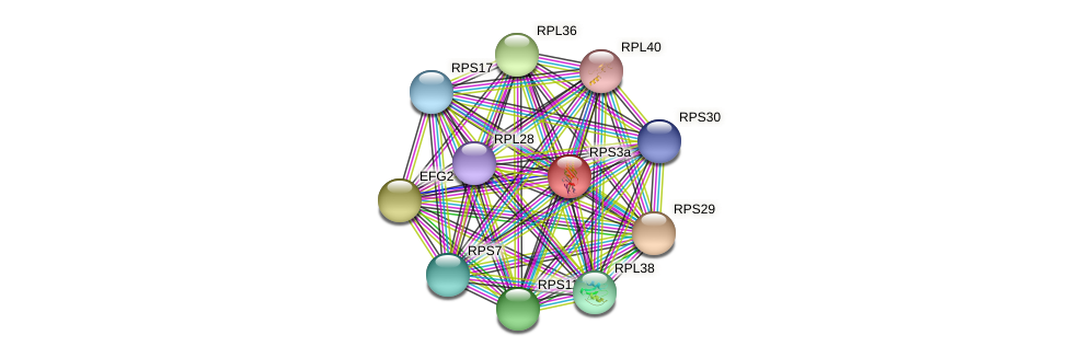 RPS3a protein (Chlamydomonas reinhardtii) - STRING interaction network
