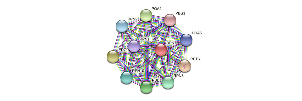 RPN7 protein (Chlamydomonas reinhardtii) - STRING interaction network