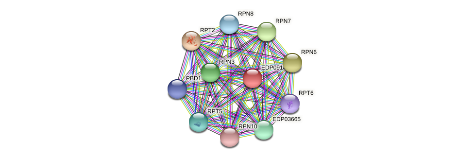 EDP09147 protein (Chlamydomonas reinhardtii) - STRING interaction network