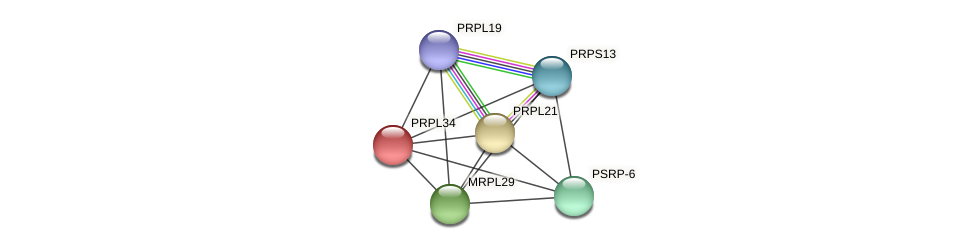 PRPL34 protein (Chlamydomonas reinhardtii) - STRING interaction network