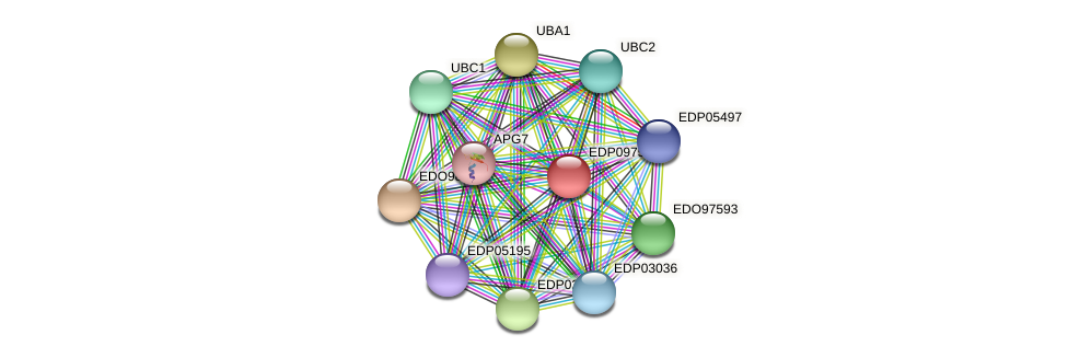 EDP09753 protein (Chlamydomonas reinhardtii) - STRING interaction network