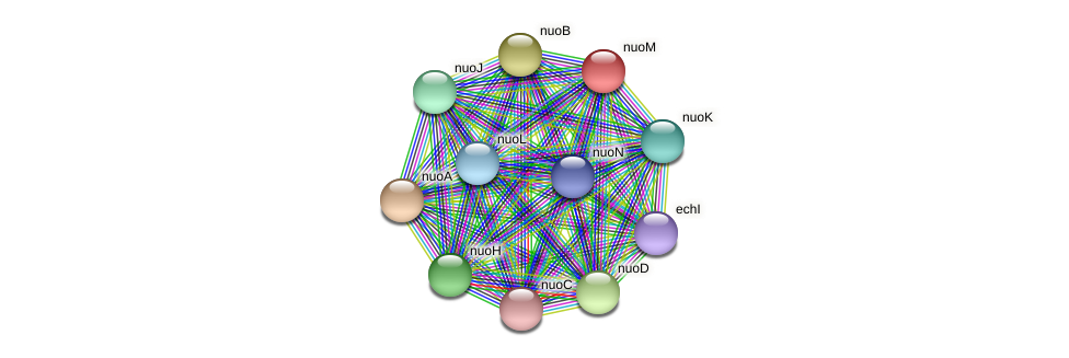 nuoM protein (Dehalococcoides mccartyi VS) - STRING interaction network