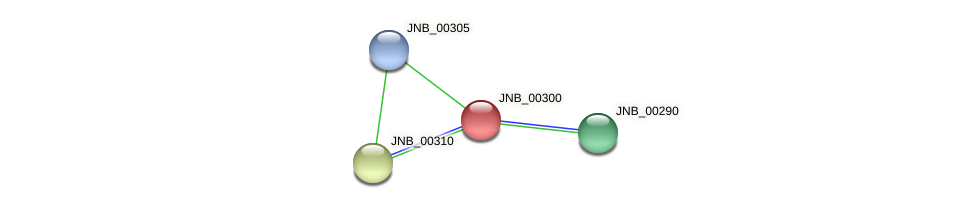 JNB_00300 protein (Janibacter sp. HTCC2649) - STRING interaction network