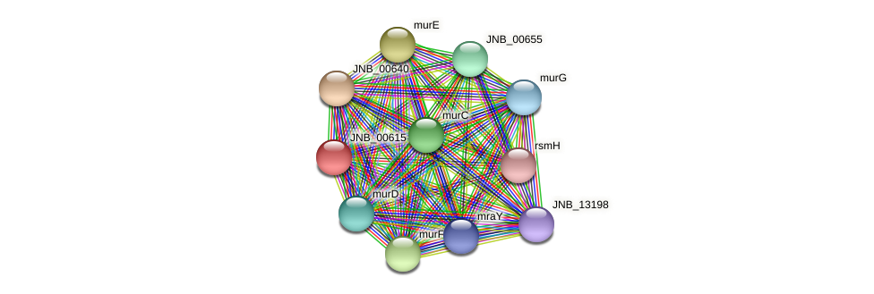 JNB_00615 protein (Janibacter sp. HTCC2649) - STRING interaction network