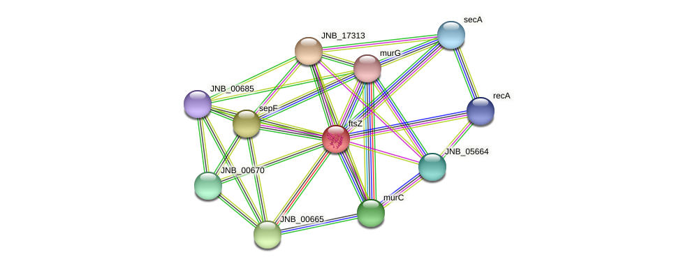 ftsZ protein (Janibacter sp. HTCC2649) - STRING interaction network