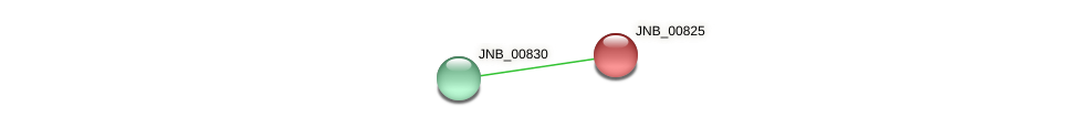 JNB_00825 protein (Janibacter sp. HTCC2649) - STRING interaction network