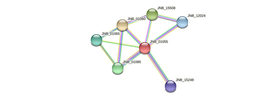 JNB_01055 protein (Janibacter sp. HTCC2649) - STRING interaction network