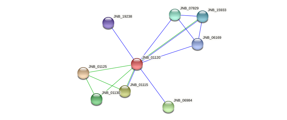 JNB_01120 protein (Janibacter sp. HTCC2649) - STRING interaction network