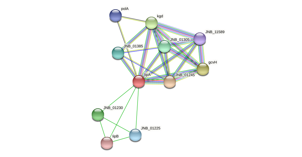 lipA protein (Janibacter sp. HTCC2649) - STRING interaction network