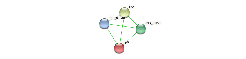 JNB_01240 protein (Janibacter sp. HTCC2649) - STRING interaction network