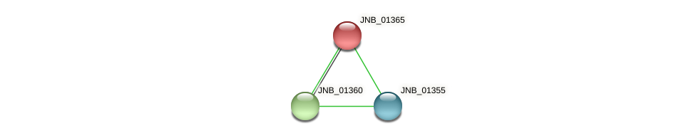 JNB_01365 protein (Janibacter sp. HTCC2649) - STRING interaction network