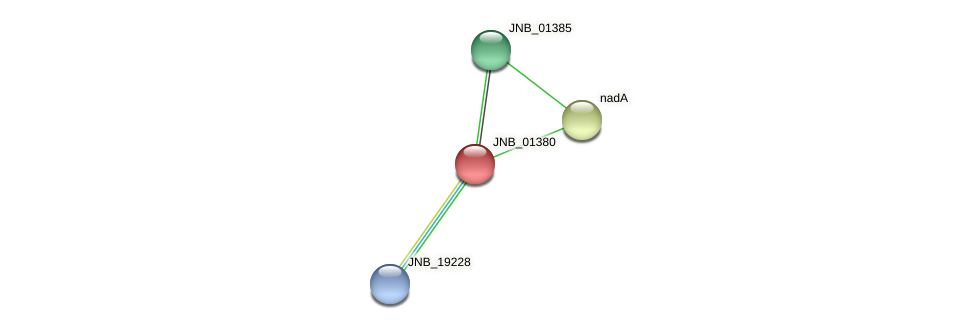JNB_01380 protein (Janibacter sp. HTCC2649) - STRING interaction network