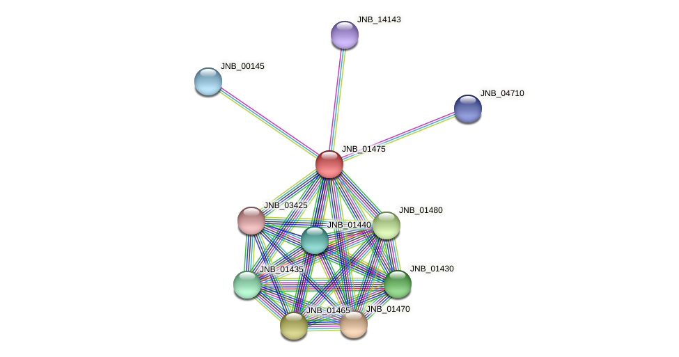 JNB_01475 protein (Janibacter sp. HTCC2649) - STRING interaction network