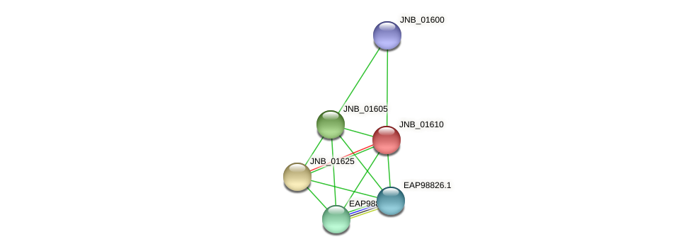 JNB_01610 protein (Janibacter sp. HTCC2649) - STRING interaction network
