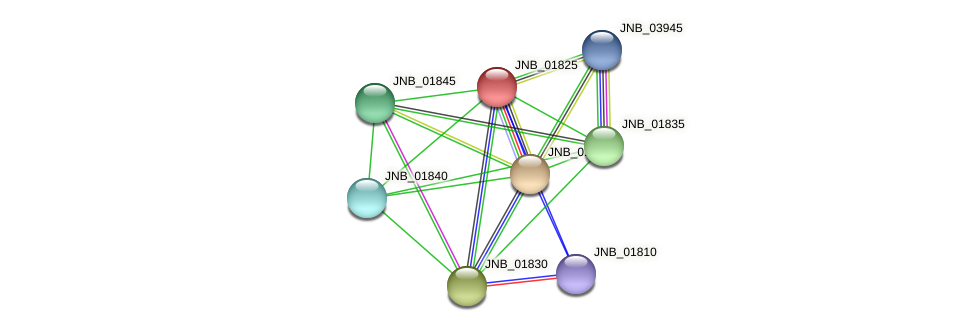 JNB_01825 protein (Janibacter sp. HTCC2649) - STRING interaction network