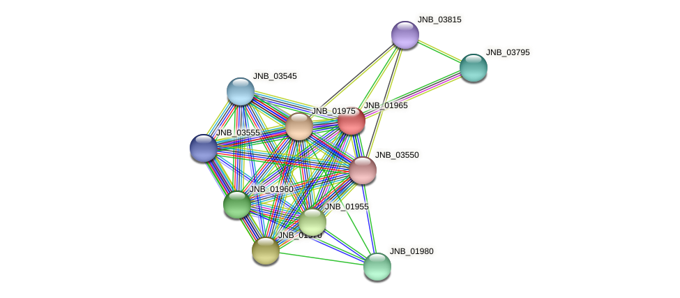 JNB_01965 protein (Janibacter sp. HTCC2649) - STRING interaction network