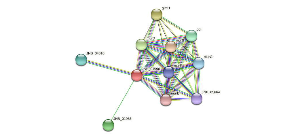 JNB_01990 protein (Janibacter sp. HTCC2649) - STRING interaction network