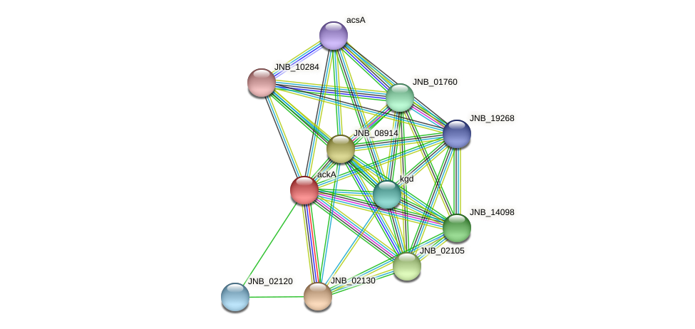 ackA protein (Janibacter sp. HTCC2649) - STRING interaction network