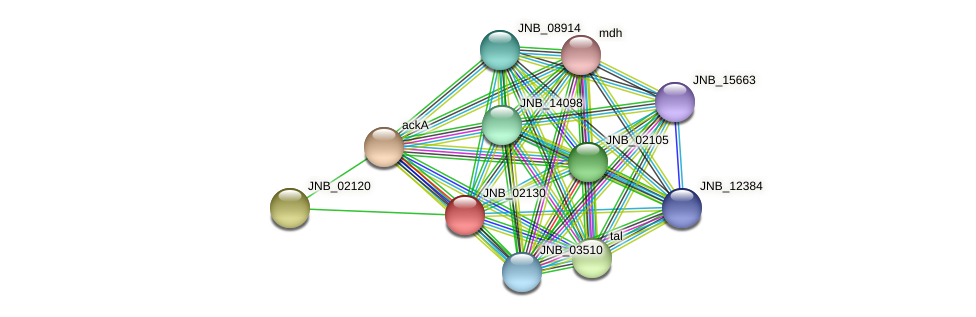 JNB_02130 protein (Janibacter sp. HTCC2649) - STRING interaction network