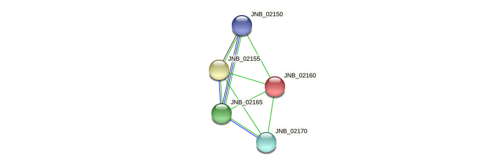 JNB_02160 protein (Janibacter sp. HTCC2649) - STRING interaction network
