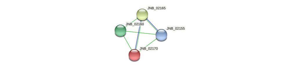 JNB_02170 protein (Janibacter sp. HTCC2649) - STRING interaction network