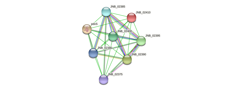 JNB_02410 protein (Janibacter sp. HTCC2649) - STRING interaction network