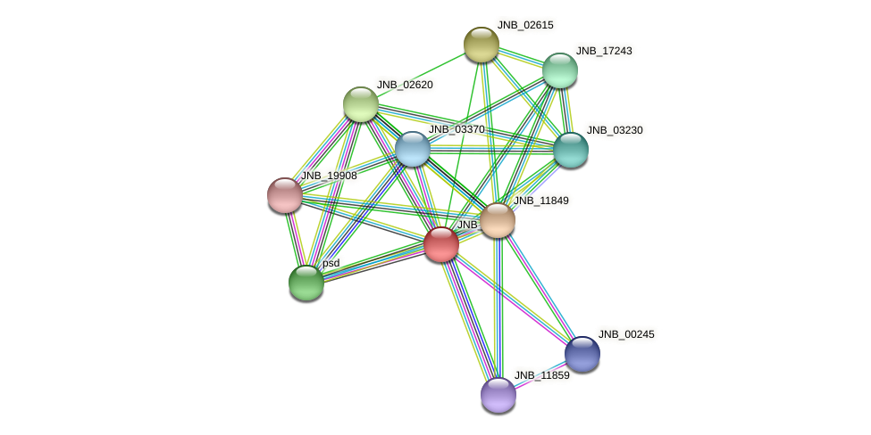 JNB_02610 protein (Janibacter sp. HTCC2649) - STRING interaction network