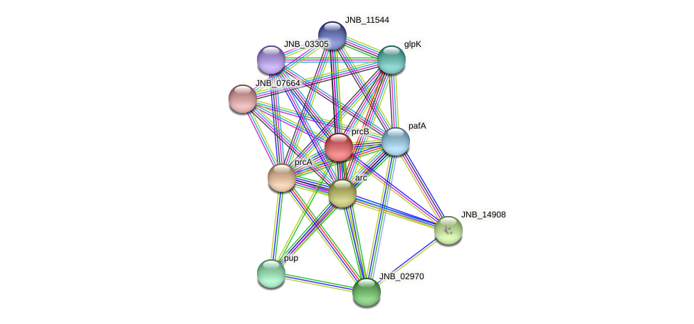 prcB protein (Janibacter sp. HTCC2649) - STRING interaction network