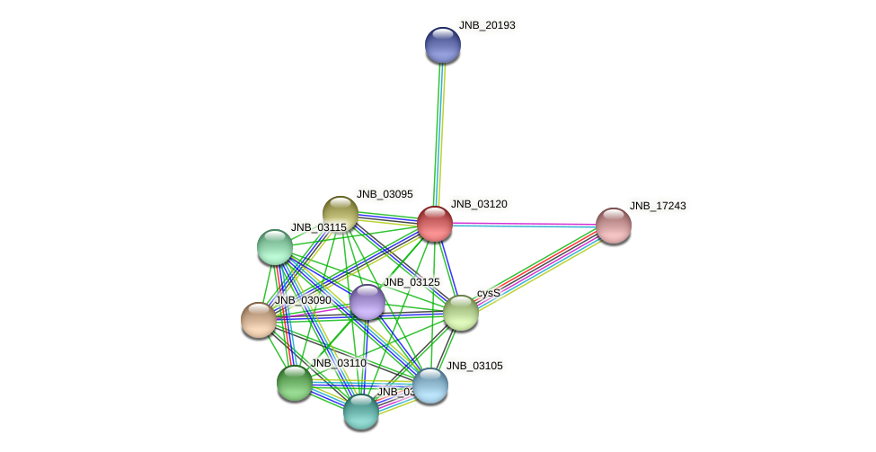 JNB_03120 protein (Janibacter sp. HTCC2649) - STRING interaction network