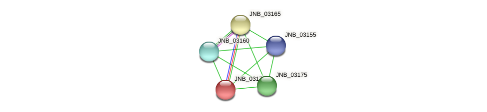 JNB_03170 protein (Janibacter sp. HTCC2649) - STRING interaction network