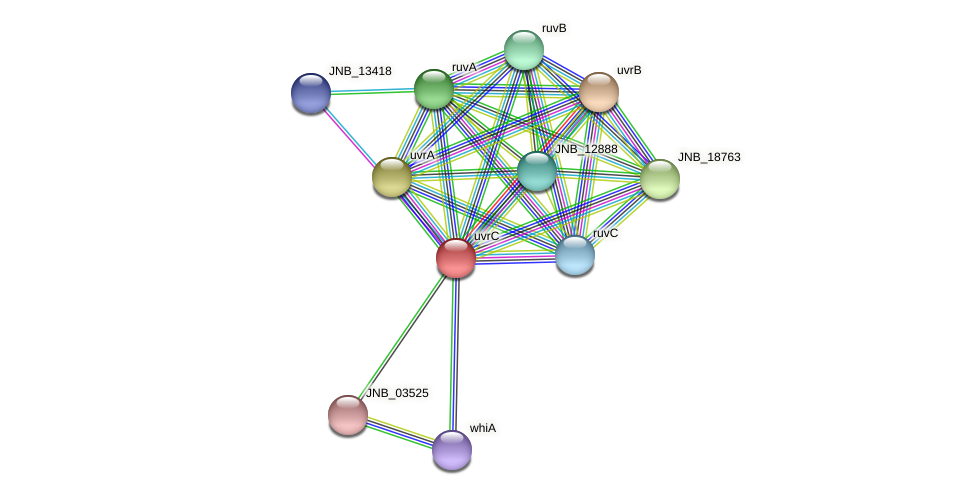 uvrC protein (Janibacter sp. HTCC2649) - STRING interaction network