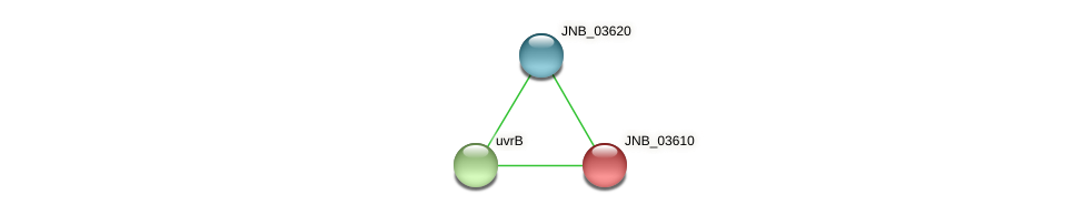 JNB_03610 protein (Janibacter sp. HTCC2649) - STRING interaction network