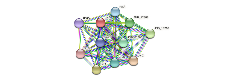 uvrB protein (Janibacter sp. HTCC2649) - STRING interaction network