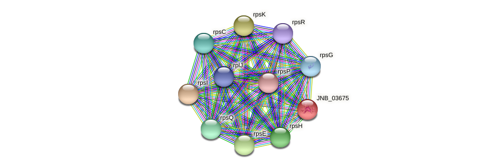 JNB_03675 protein (Janibacter sp. HTCC2649) - STRING interaction network