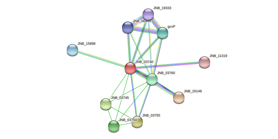 JNB_03740 protein (Janibacter sp. HTCC2649) - STRING interaction network