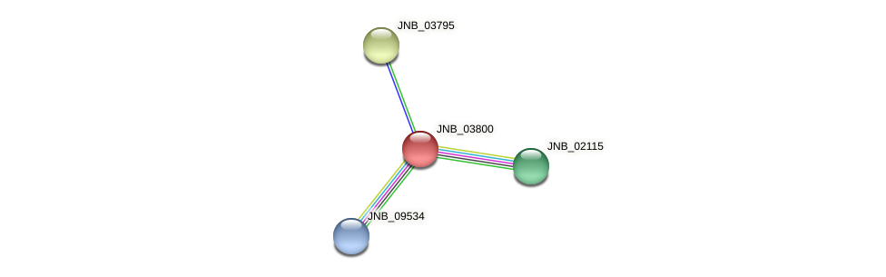 JNB_03800 protein (Janibacter sp. HTCC2649) - STRING interaction network