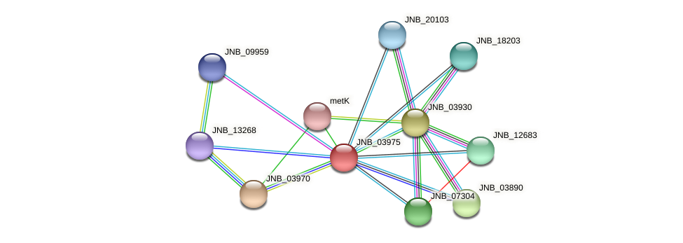 JNB_03975 protein (Janibacter sp. HTCC2649) - STRING interaction network