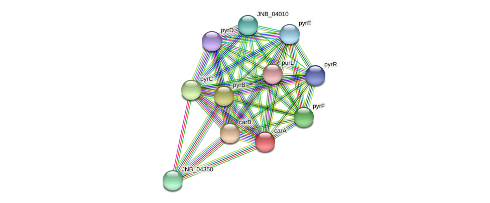 carA protein (Janibacter sp. HTCC2649) - STRING interaction network