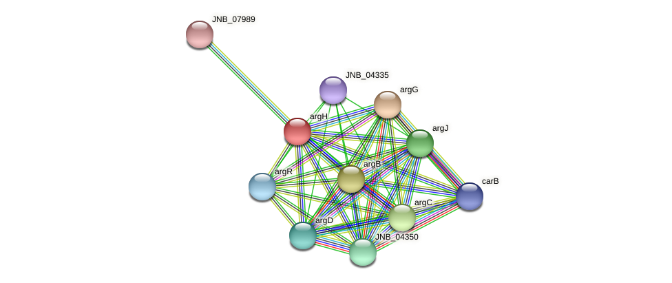argH protein (Janibacter sp. HTCC2649) - STRING interaction network