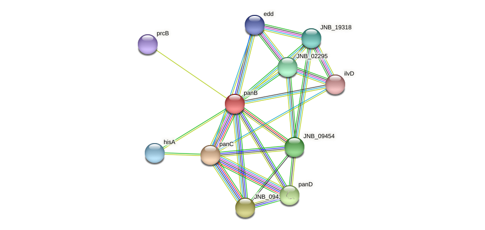 panB protein (Janibacter sp. HTCC2649) - STRING interaction network