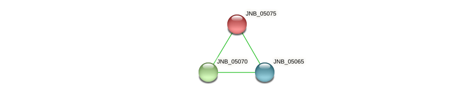 JNB_05075 protein (Janibacter sp. HTCC2649) - STRING interaction network
