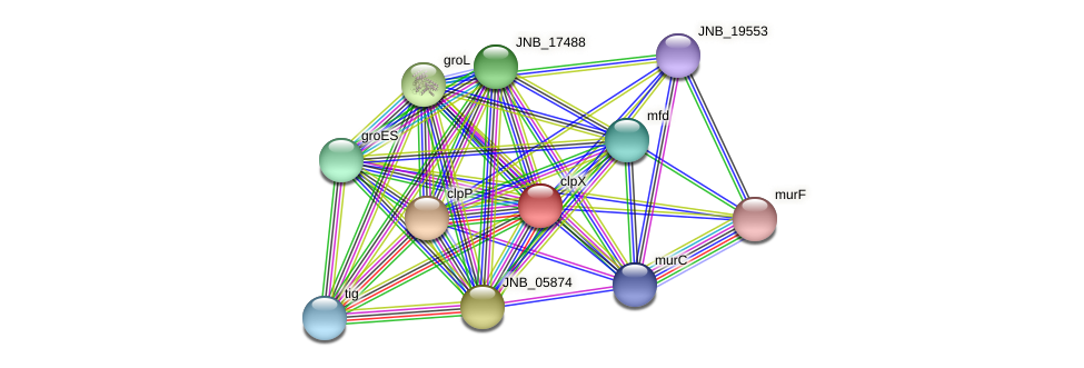 clpX protein (Janibacter sp. HTCC2649) - STRING interaction network